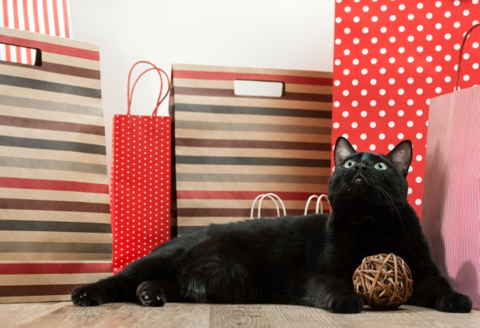 cat laying among shopping bags
