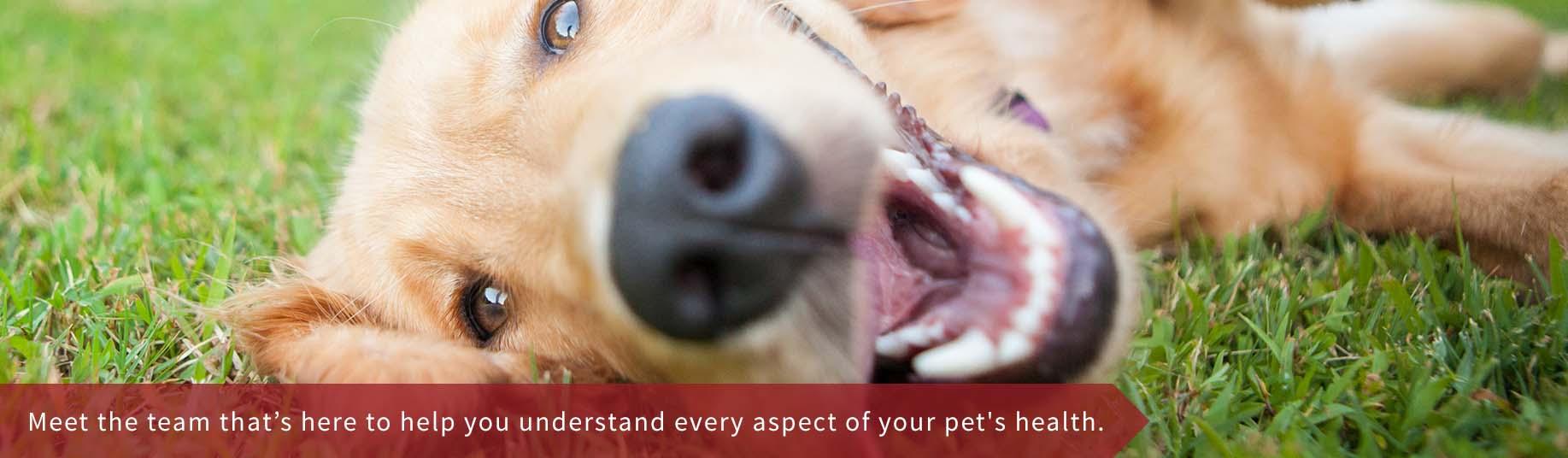 Woodbine Animal Clinic East Toronto Vet Clinic Cat Slider Dog Slider
