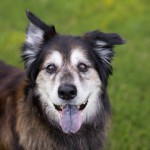 Woodbine Animal Clinic offers quality vet care for your senior pets
