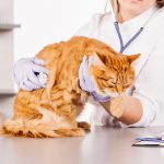 Pets and diabetic emergency from Woodbine Animal Clinic Toronto