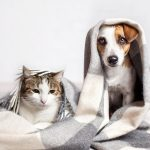 Winter activities for dogs and cats from Woodbine Animal Hospital Toronto