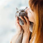 General cat care tips from Woodbine Animal Clinic Toronto