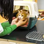 how to get your fearful, stressed cat to the Veterinarian