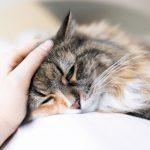 Pet Insurance, sick pet