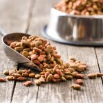 Are Grain-Free Diets A Good Idea For Your Pet?
