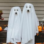 dogs dressed in ghost costume for Halloween