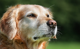 The Best Exercises for Your Senior Dog or Cat
