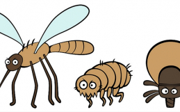 Pesky Pests: Part 3 of 3 – The Irritating