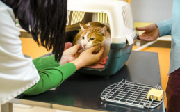Fearful Cats and Veterinarians: How to Improve the Quality of Their Visits