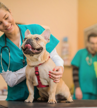 Keeping Your Pet Healthy: Understanding The Veterinary-Client-Patient-Relationship
