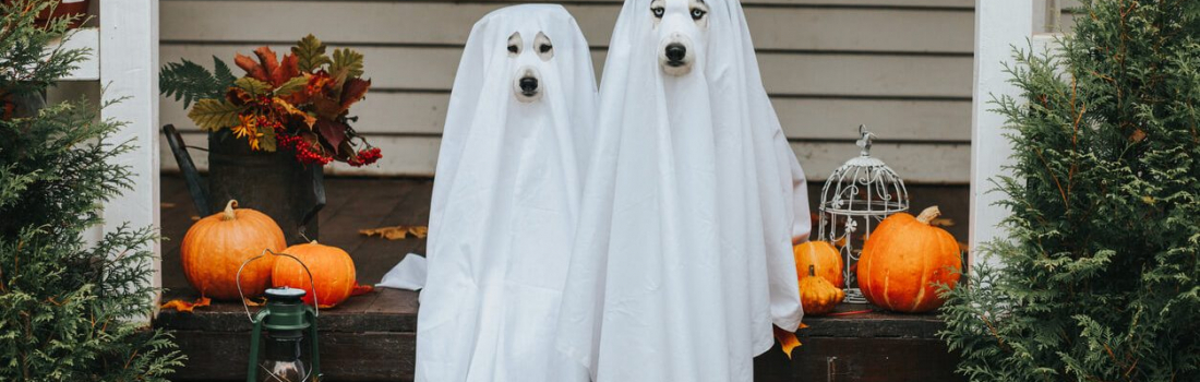 How To Safely Celebrate Halloween with Your Pet