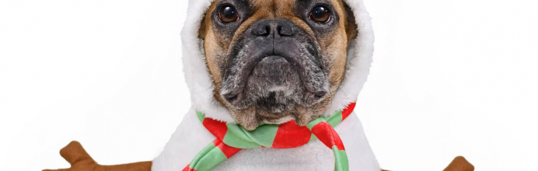Pet-Friendly Gifts For The Holiday Season