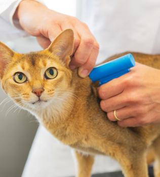Microchips Reunite Lost Pets