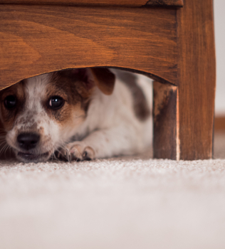 Thunderstorms and Fireworks: How to Help a Fearful Dog