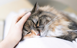 Is Pet Insurance Right For Me?