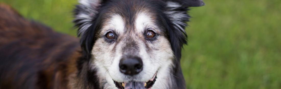 Senior Pet Focus