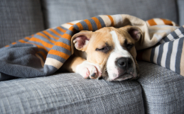 What you need to know about the Canine Flu