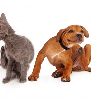 Fall Allergies and Your Pet