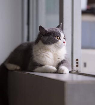 Why Indoor Cats Need Vaccines