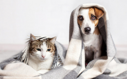 Winter Activities for Dogs & Cats